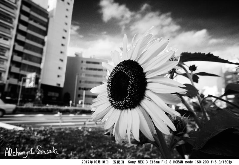 五反田DSC03320 G_0 a