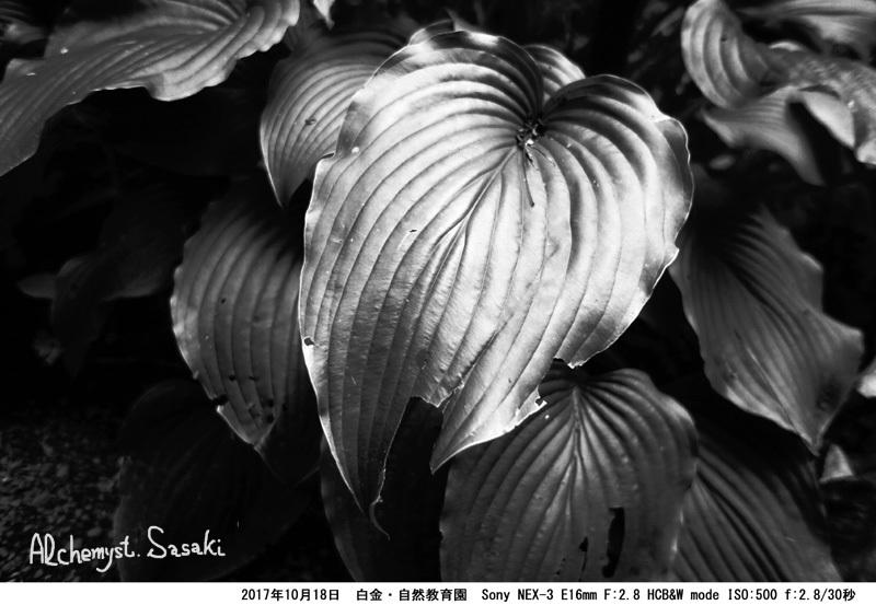 自然教育園DSC03372 G_0a