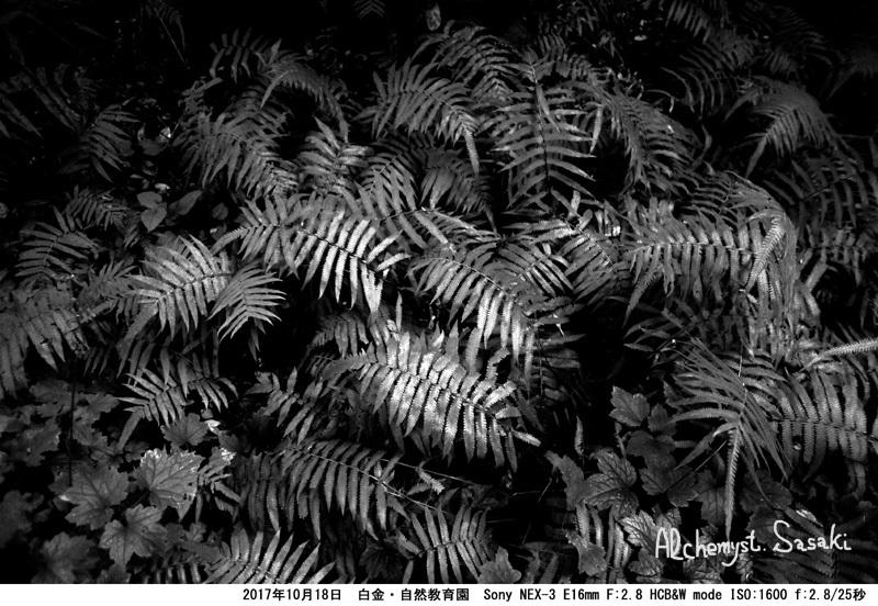 自然教育園DSC03389 G_0a
