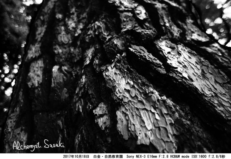 自然教育園DSC03471 G_0a