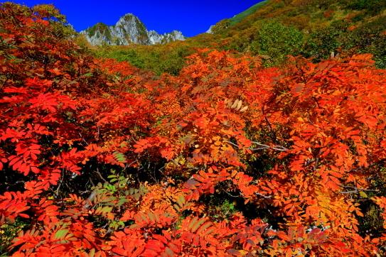 ナナカマドの深紅の紅葉と宝剣岳