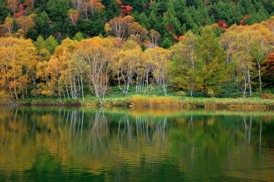 黄葉映える木戸池