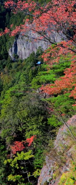 松の緑とモミジの紅葉彩る鳳来寺