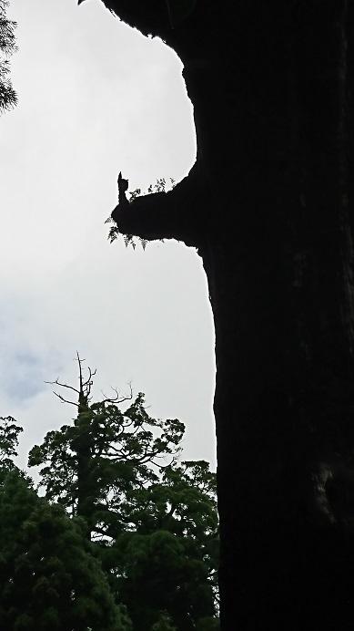 2017鹿児島369