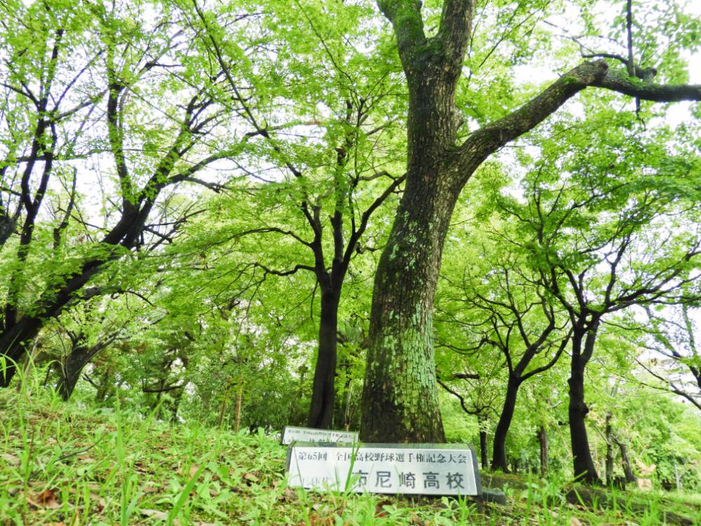 鳴尾浜DSCN4272