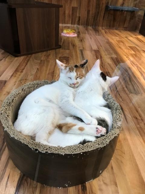 猫29.11.25