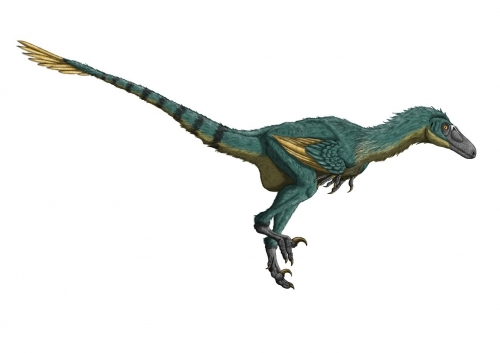 ドロマエオサウルス類_3 - Ancie...