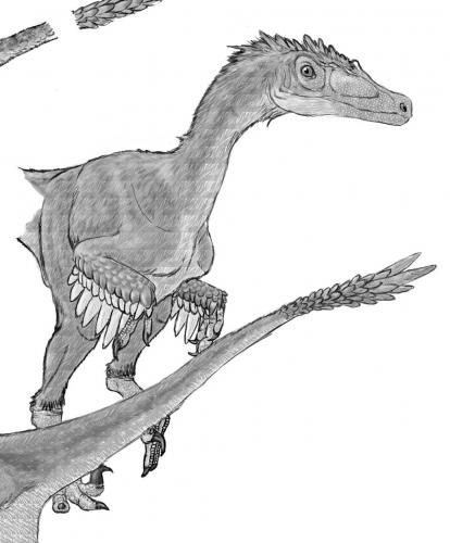 ドロマエオサウルス類_4 - Ancie...