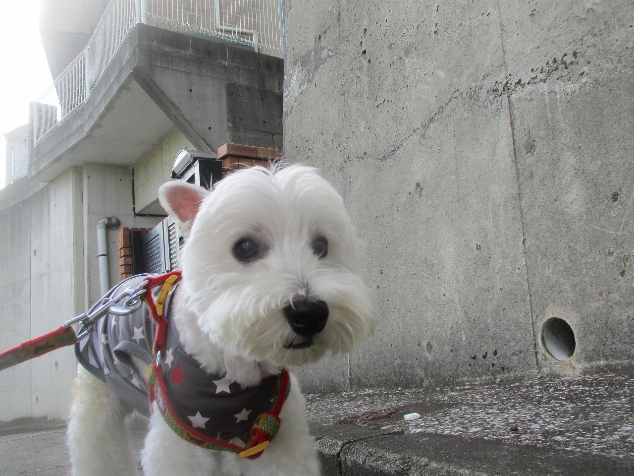 ツボ押しボール
