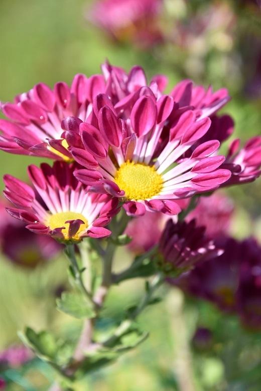 004 お花