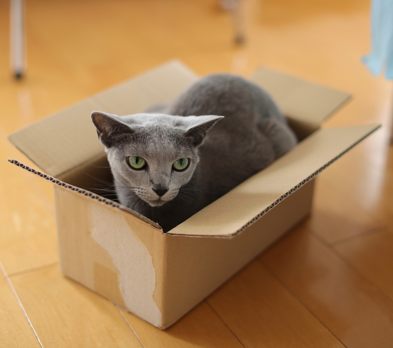 新、箱入りエマ