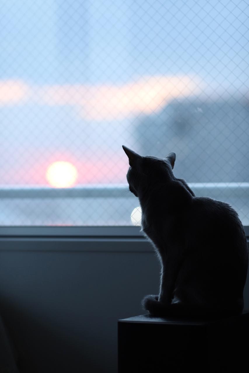 夕日とテオ