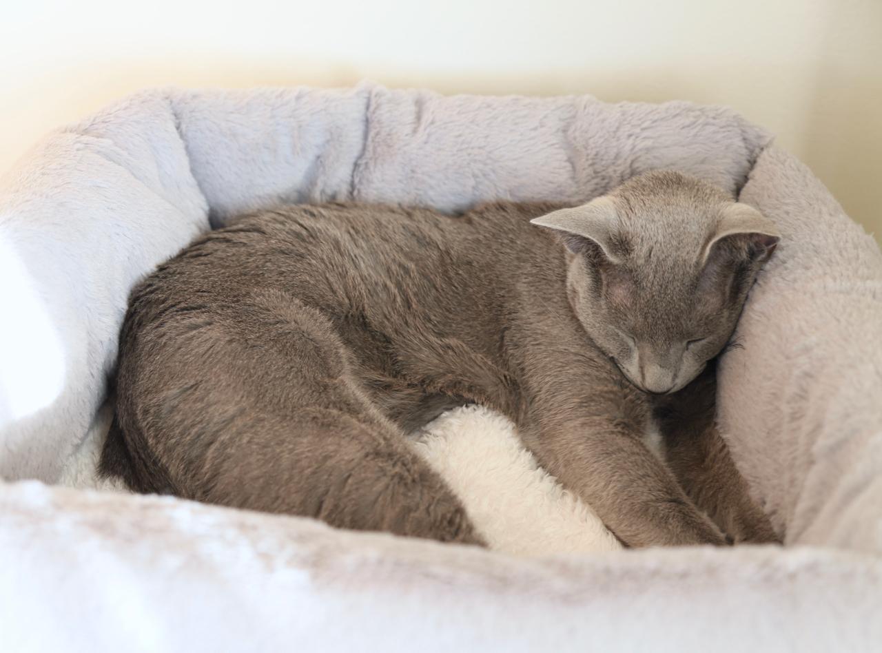 四角ベッド