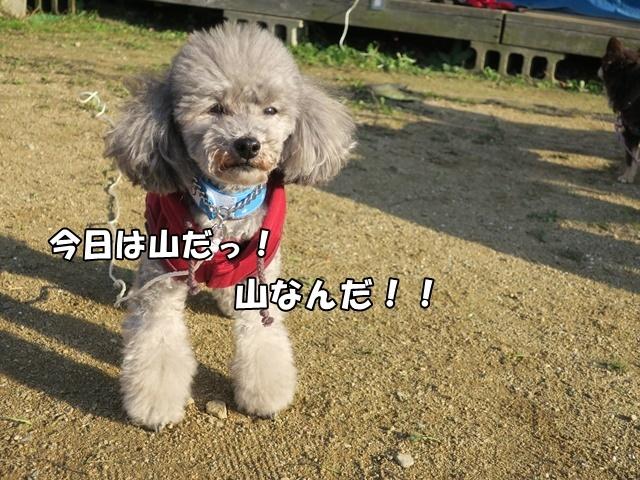 IMG_476120171127.jpg