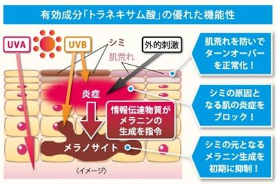 トラネキサム酸の機能説明