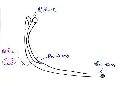 GJチューブ素人のイメージ1120 - コピー