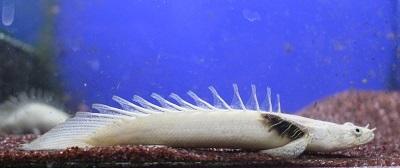 白エンドリ1105-2