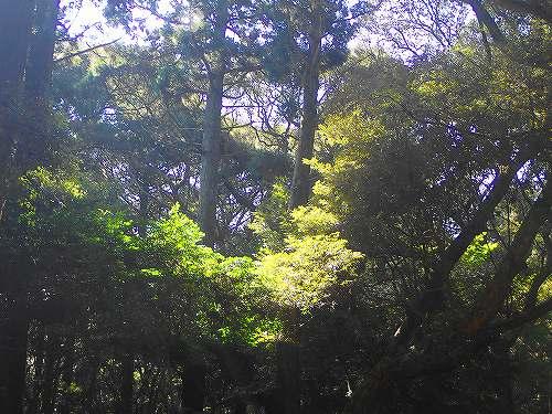 s-鹿島神宮20171009⑨