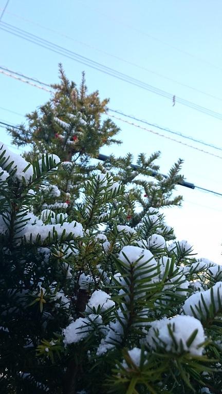 171117初雪2