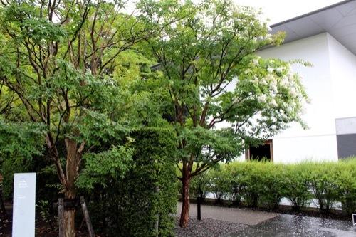 0281:鈴木大拙館 水鏡の庭へ