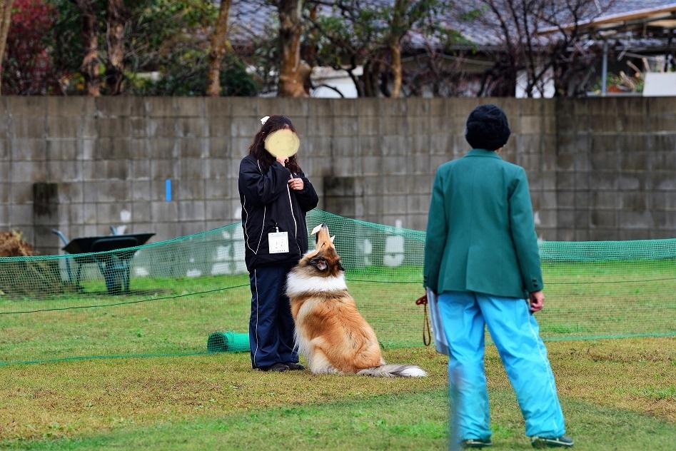 H291123hinagiku06.jpg