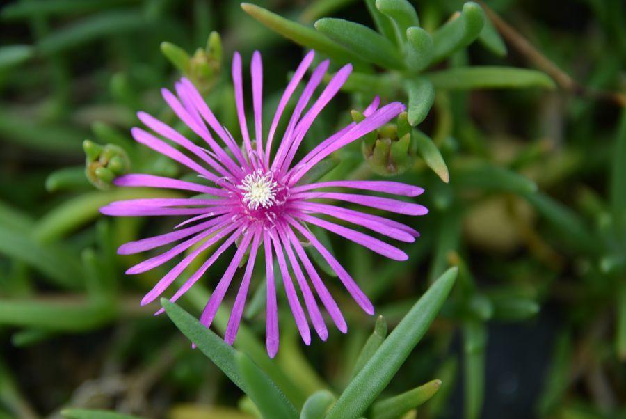 ピンクの秋の花-6