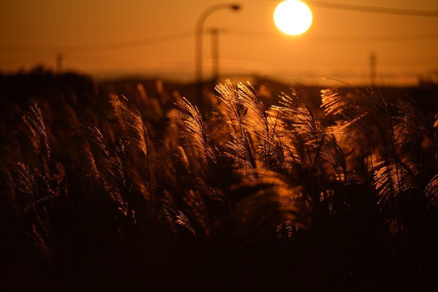 夕陽とススキ-2