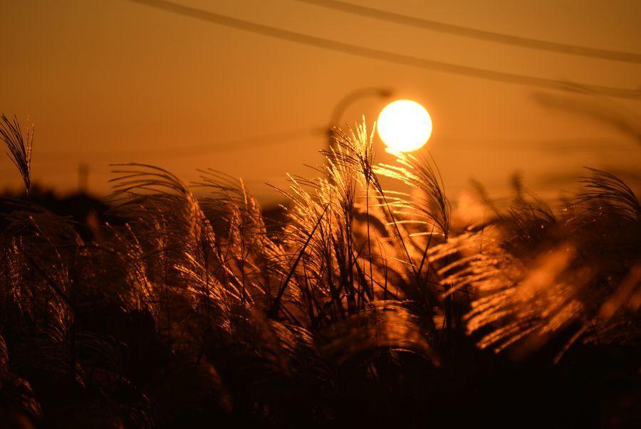 夕陽とススキ-5