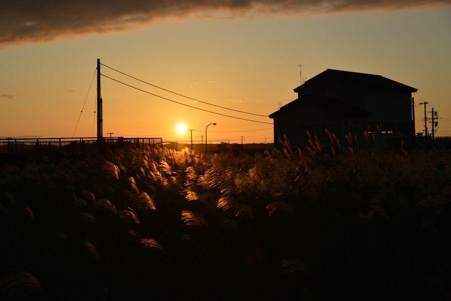 夕陽とススキ-7