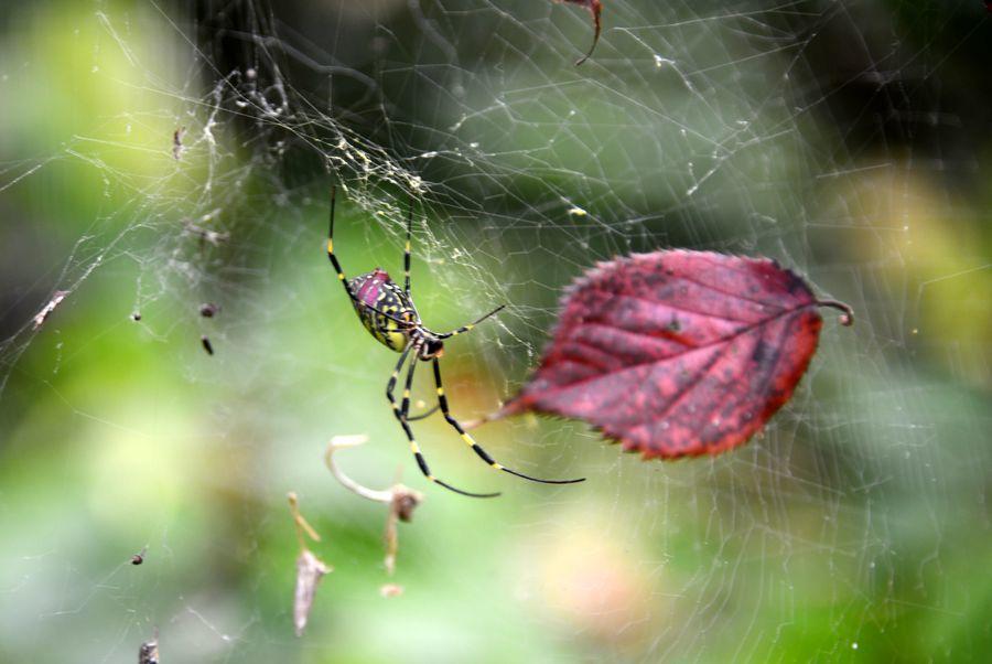 蜘蛛の糸-2