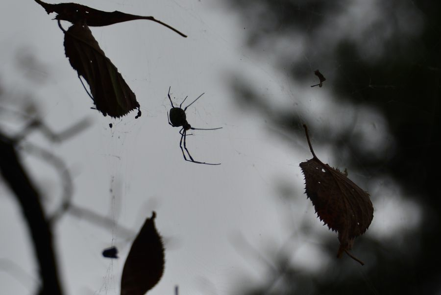 蜘蛛の糸-4