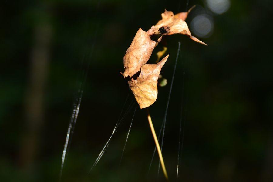 蜘蛛の糸-9