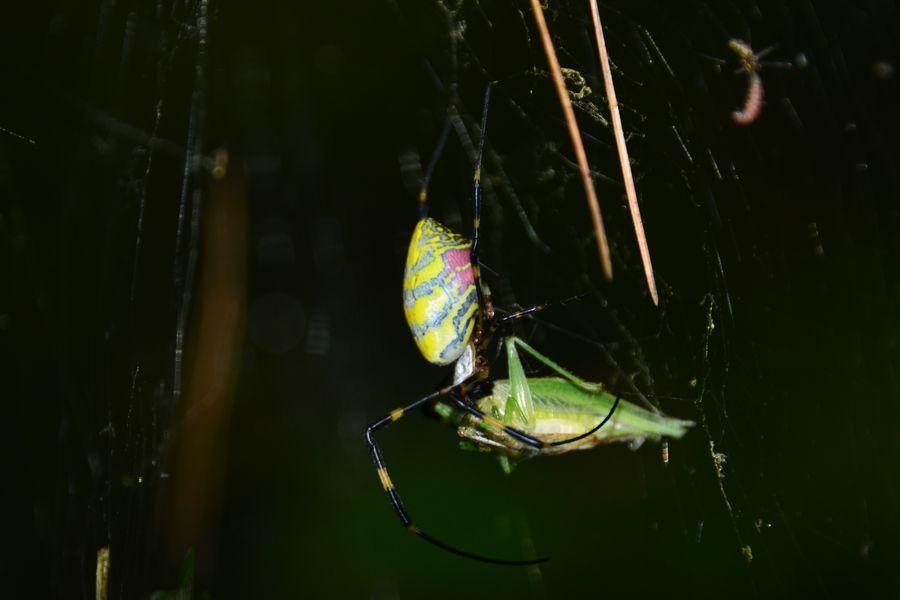 蜘蛛の糸-7