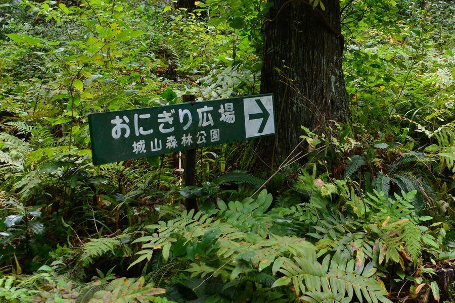 林の中で-2