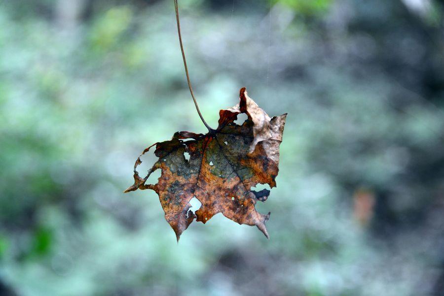 林の中で-6