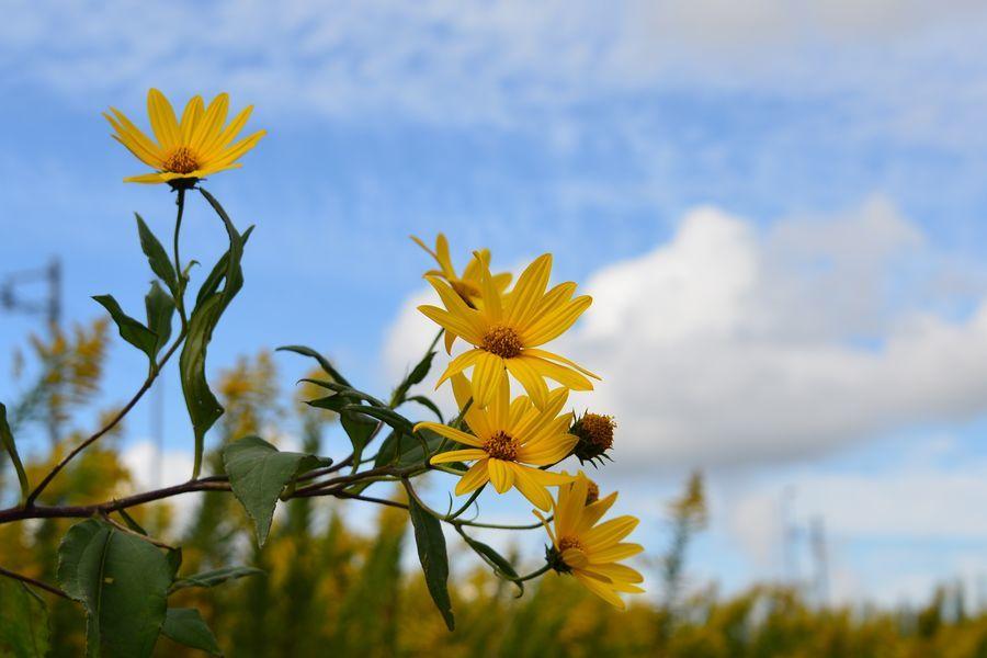 秋の花や-3