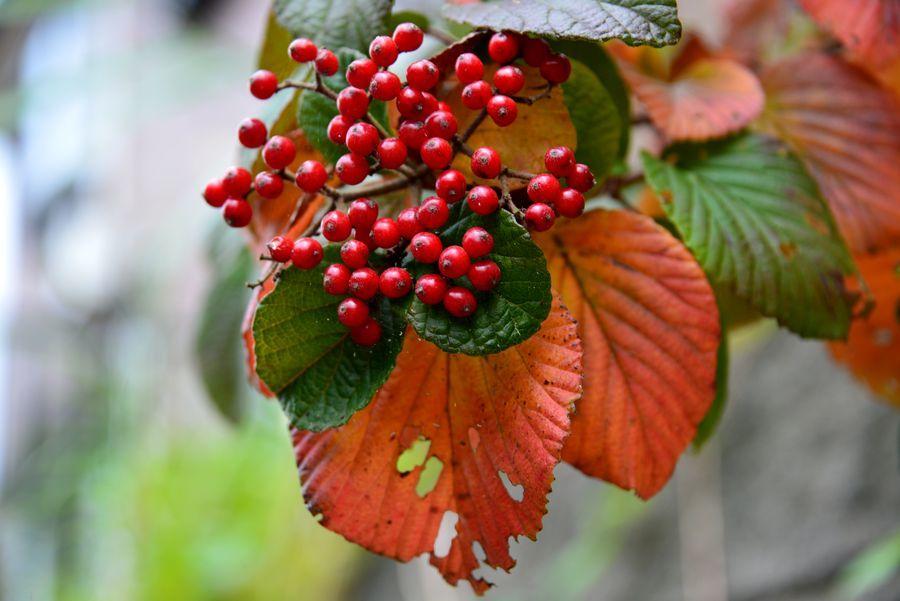 秋の花や-5