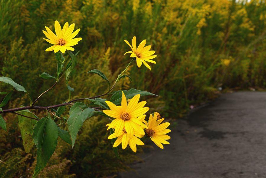 秋の花や-6