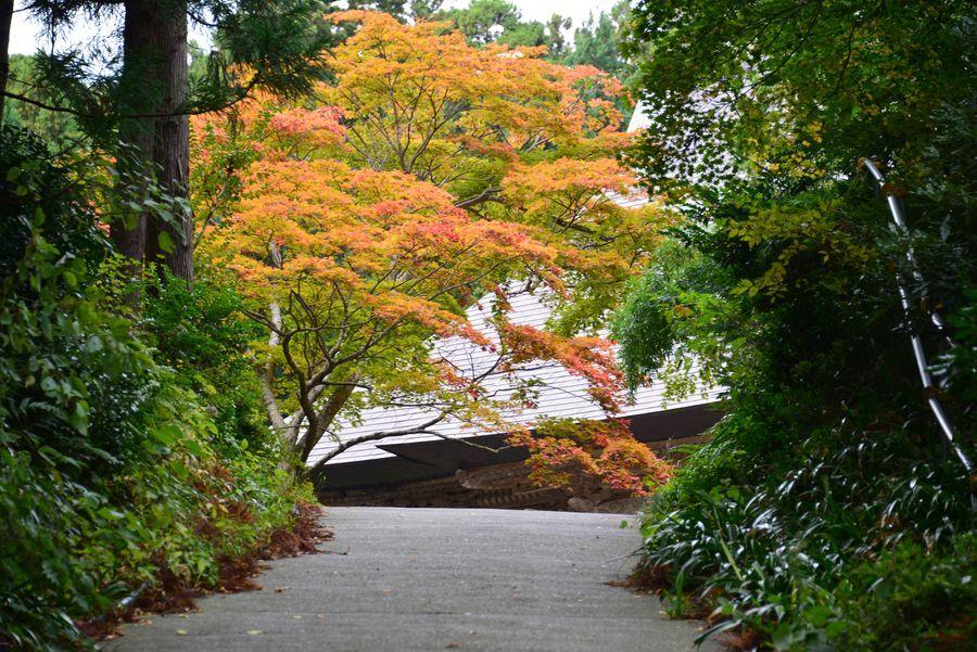 国上寺の紅葉-2