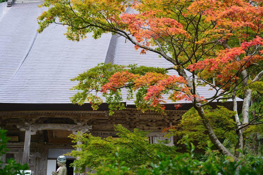 国上寺の紅葉-4