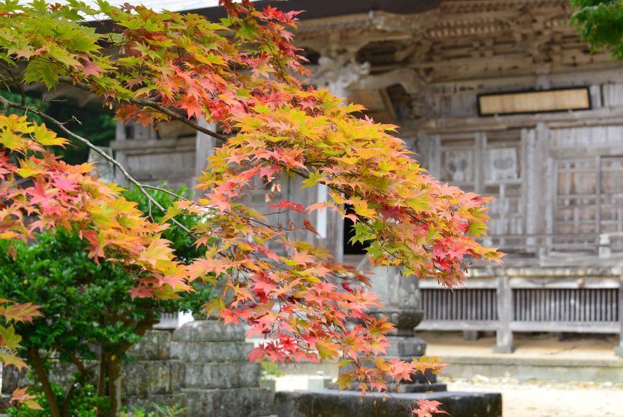 国上寺の紅葉-5