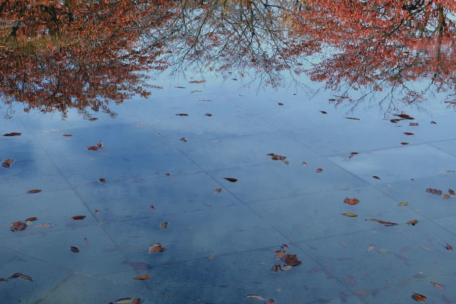 池に映して-6