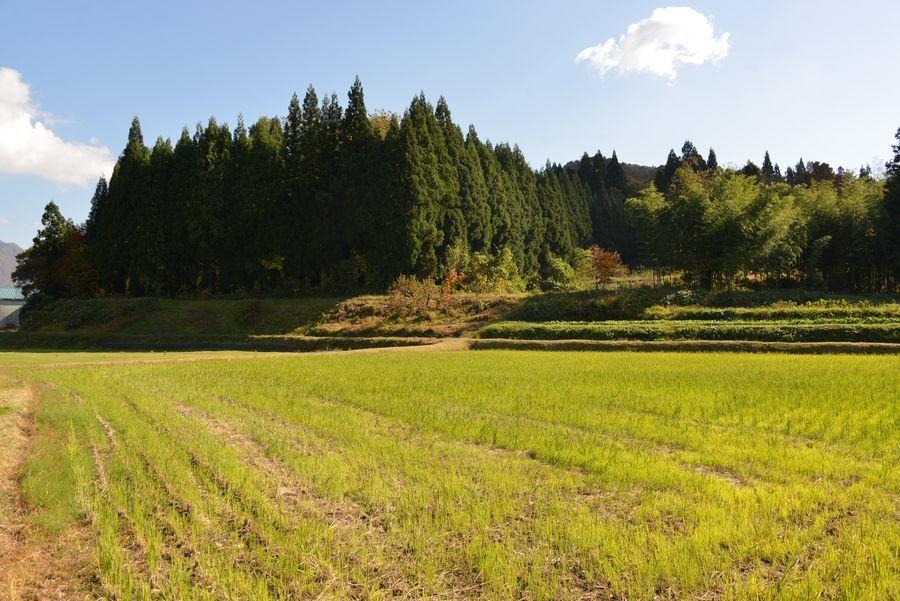下田の秋-3