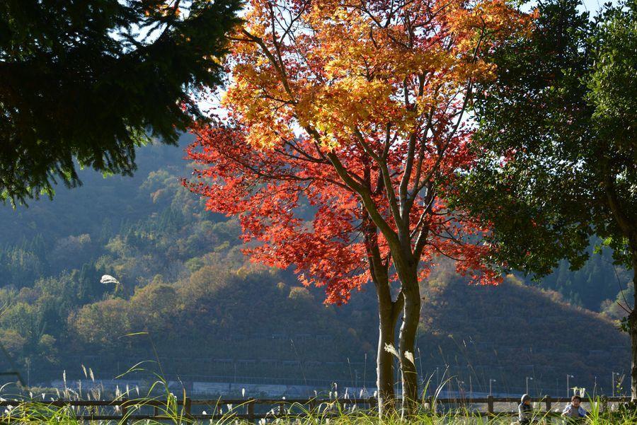 大谷ダム湖-8