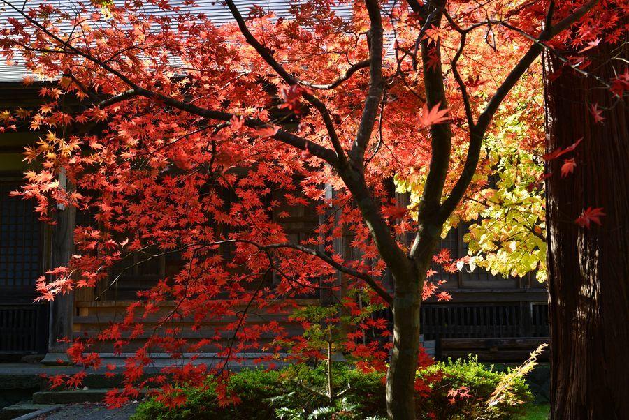 宝光院の紅葉-6