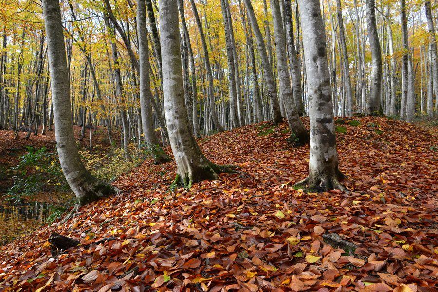 美人林 落ち葉-2