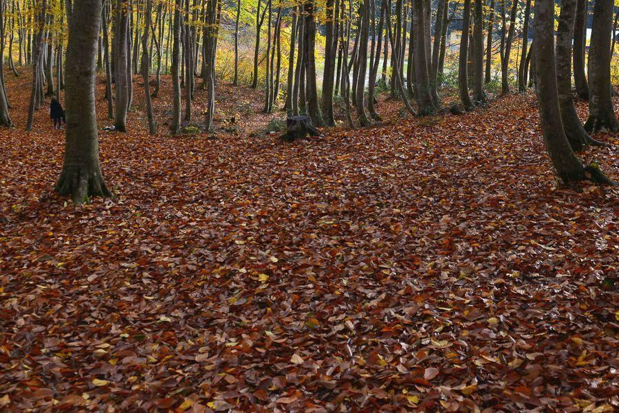 美人林 落ち葉-3