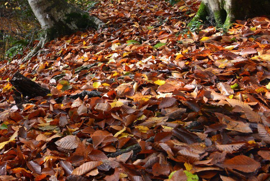 美人林 落ち葉-5