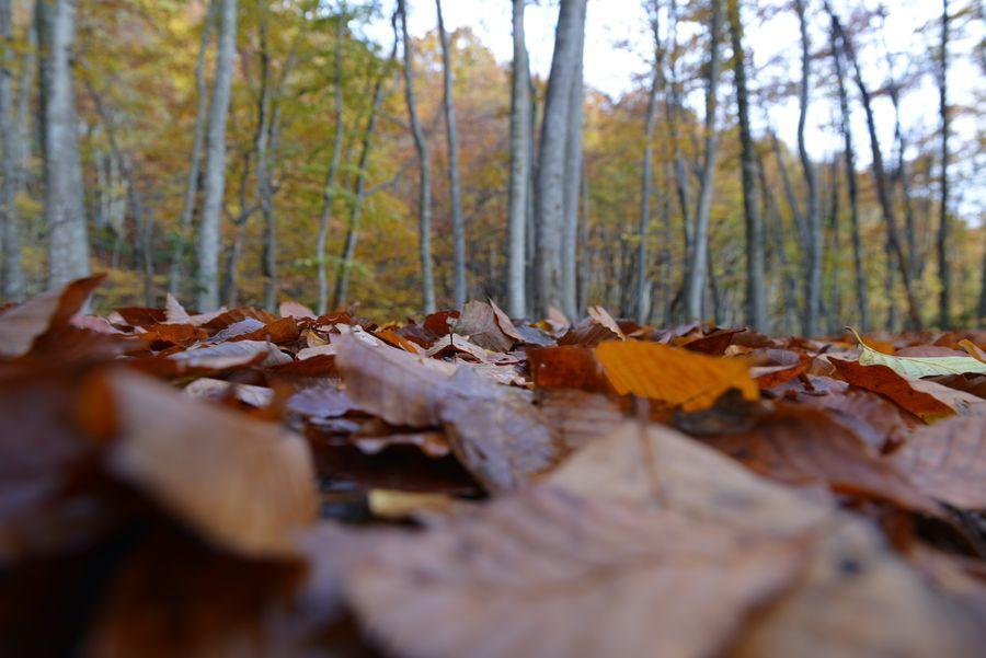 美人林 落ち葉-6