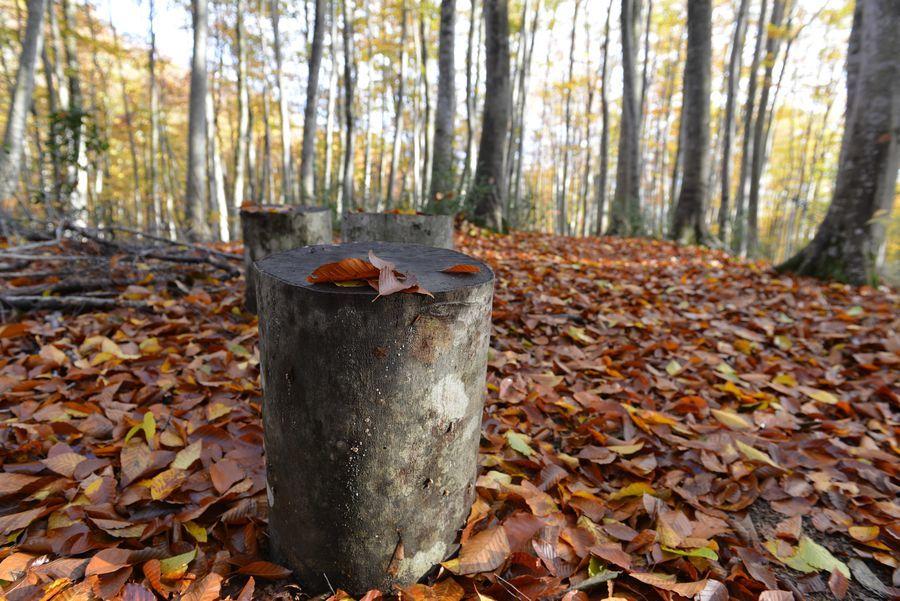美人林 落ち葉-7